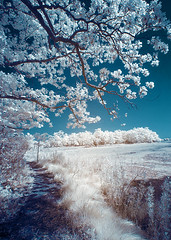 IMG_3405 (Excaliber2013) Tags: ir infrared lifepixel marshlandsconservancy