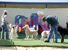Guide-dog students play-time