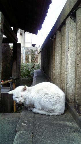 Today's Cat@20080224