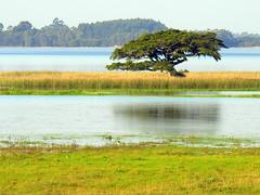 Lagoa dos Quadros (Claudio Marcon) Tags: trees lake reflection tree nature water brasil natureza lagoa rs árvore reflexo fotoclube ascoresdosul claudiomarcon salveanatureza claudiolmarconribeiro
