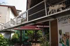 R2-4861 (SCAD Bangkok) Tags: charity pet 20d animal cat canon puppy thailand asia exterior bangkok adoption scad