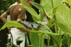 (spitpretty) Tags: film butterfly minoltasrt101