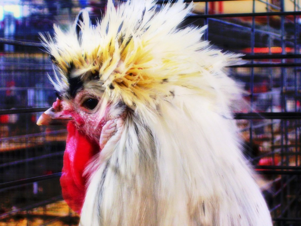 The Worlds Best Photos Of Chicken And Cny Flickr Hive Mind
