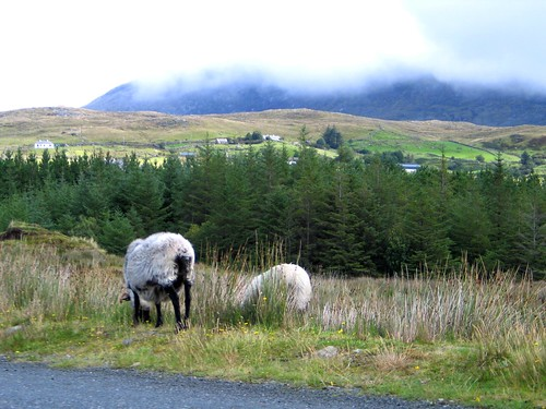 Ireland - Aug 2008 343