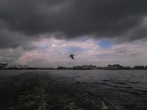 千葉港のカモメ