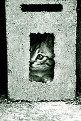 Vinx (HiDe & SeeK) Tags: bw grey gris monocromo spain kitten gato cachorro felino gat 400d man