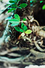 Deeply Rooted (89800025_f) (Fadzly @ Shutterhack) Tags: plants hot tree film leaves analog garden asian 50mm hotel nikon asia bokeh roots parasites velvia malaysia tropical tropic analogue nikkor fujichrome awana nikonfm2 rvp100f ai kijal asean terengganu equator humid mys ماليزيا crawlers maleisië マレーシア 马来西亚 sooc nikonstunninggallery shutterhack