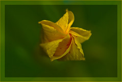 Simple @ Jovisur (jovisur) Tags: flor periquito naturesfinest platinumphoto thatsclassy betterthangood goldstaraward donpedrodonpedroperiquitocapulloflor