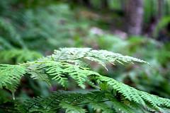Catskills Camping (76) (gutch1) Tags: camping trees nature forest canon hiking upstatenewyork catskills 30d catskillmountains canon30d canon1740mm campingupstatenewyorkforestcatskills