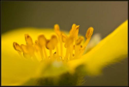 flower-_MG_9954.jpg
