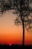 Dutch Landscapes - tree @ sunset (lambertwm) Tags: sunset tree netherlands dutch landscape zonsondergang bomen utrecht tramonto sonnenuntergang nederland boom pôrdosol árbol puestadesol albero arbre árvore hilversum 日落 baum träd landschap viewcount crepúsculo puestadelsol coucherdusoleil غروب blueribbonwinner 日没 غُروب، مَغيب lwmfav