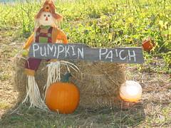 Smith Farm pumpkin patch