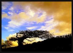 A TREE (brynmeillion - JAN) Tags: tree wales fdsflickrtoys searchthebest cymru ceredigion soe coeden plasnewydd supershot flickrsbest bej abigfave ultimateshot infinestyle treesubject flickrdiamond ysplix theperfectphotographer goldstaraward jediphotographer