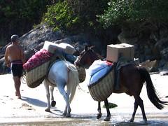 Transportando a carga na praia (Vera Schuck Paim) Tags: fish praia beach water fisherman wave peixe burros pescador transporte onda carga rebentação mantimentos