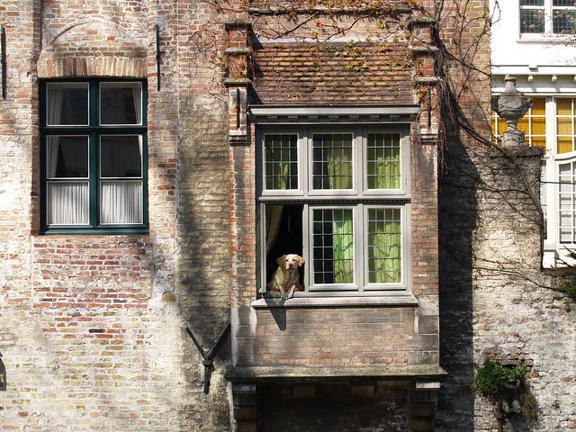 A nosy dog at the window (by ArgyHellas)