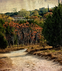 hiking path textured (simis) Tags: trees shadow red green nature yellow creek landscape path walnut hike spire photowalk textured austintx fromarchives