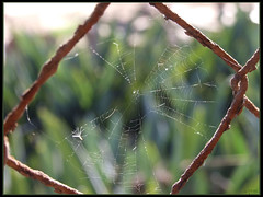 Spider silk on steel