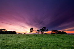 A New Day (Chris Gin) Tags: park newzealand sunrise dawn cornwall day cloudy auckland filter nz nd graduated