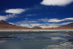 Bolivia (JVP pHoTOs) Tags: pink blue sky green water desert flat flamingo salt flamingos bolivia lagoon vulcano vulcanos salaruyunivulcano