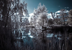 Only The Silence. (darth_bayne) Tags: reflection clouds pond sweden stockholm infrared sverige botanicalgarden bergianskatrdgrden sigma1850mm bergiangarden hoyar72filter flickrenvy goldstaraward absolutelystunningscapes ininfrared
