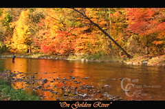 On Golden River (CampCrazy Photography) Tags: autumn trees red orange ontario man reflection fall water beautiful leaves yellow forest season gold golden fishing fisherman rocks stream alone relaxing salmon peaceful bank pebbles calm line rod serene limbs moment mississauga creditriver erindale totalphoto mywinners platinumphoto goldsealofquality goldstaraward superbestshotsonflickr campcrazyphotography serenalivingston