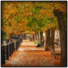 Fall sidewalk by the river (Mike G. K.) Tags: autumn trees orange france fall girl leaves fence river bench october path row foliage strasbourg sidewalk ill alsace hdr photomatix tonemapped tonemapping