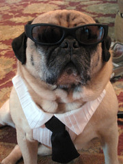 norman in his cool shades and tuxedo