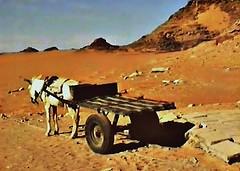 GYPTEN, Eseltransporter fr mde Touristen, effecte, 110 (roba66) Tags: gypten esel transporter egypte kartpostal photosandcalendar pharaonen  landderpharaonen eselkarre
