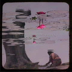 Dreaming in the Lotus (designldg) Tags: pink people woman india flower water mystery asia lotus dream shanti mythology bihar भारत fivestarsgallery indiasong hourofthesoul creattività mirrorser