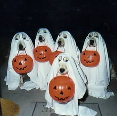 Ghost Dogs by wakefielddavid, on Flickr