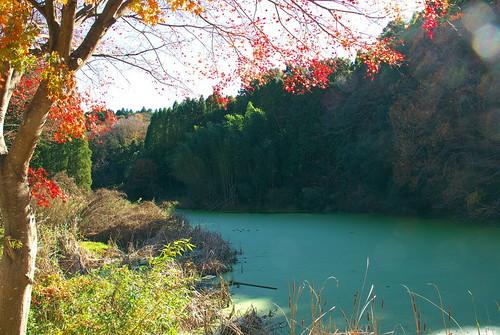 養老渓谷 池