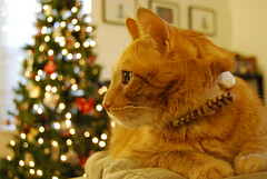 Harry poses for his Christmas photo.  Kind of. (,,,^..^,,,) Tags: christmas cats nikon tabby harry bowtie 1855mm orangetabby 2008 tabbycat orangecats christmasphoto ilovetarget bestofcats nikond40x d40x catapparel