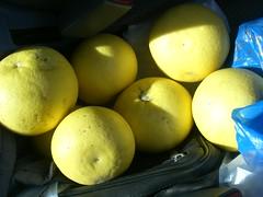 grapefruit hania chania