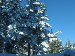 IMG_2598 (Iv Petrova) Tags: mountain snow newyear rila