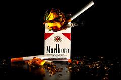 التدخين سبب رئيسي للسرطان وأمراض الرئة (7LM) Tags: canon وردة 500d دخان مارلبورو 7lm xx7lmxx