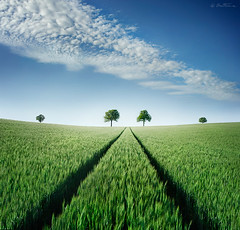 Believe in Your Destiny (Ben Heine) Tags: trees light summer cloud tree green art nature ecology landscape vent photography hope freedom countryside fly vanishingpoint spring goal corn scenery energy heaven poem belgium belgie bright wind god spirit path walk wheat magic champs tracks peaceful happiness bluesky vert boom symmetry oxygen fate enjoy destiny future breathe tomorrow t nuage destin campagne caress arbre printemps chemin pursuit perfection paradis faraway bl platteland espoir destine pointdefuite petersquinn platpays justclouds benheine colorphotoaward braives naturewatcher samsungimaging believeinyourdestiny