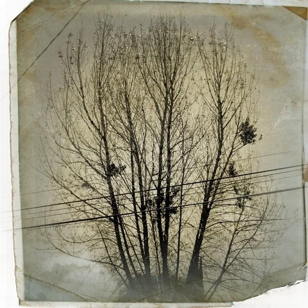 Mil ramas distintas.