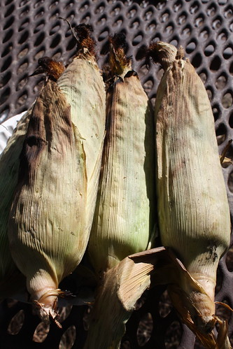 Campfire-roasted corn