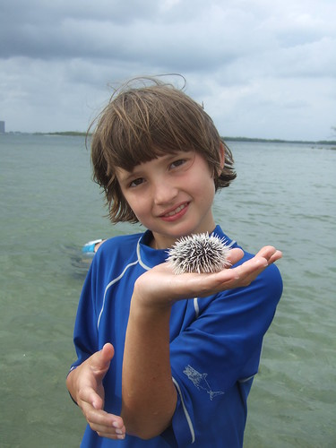 beau with west indian sea egg