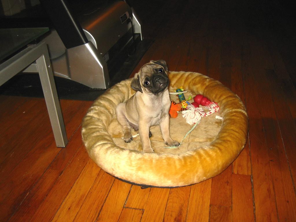 Boozer - 3 months old