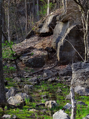 Rockwoods Reservation, in Saint Louis County, Missouri, USA - swamp and rocks