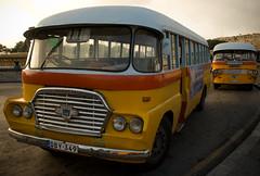 A maltese bus