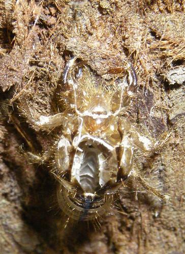 Bee Macro shot