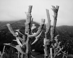 frost on Mt Lafayette