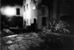 (NuageDeNuit   Chiara Vitellozzi) Tags: bw film cat dof bokeh bn notte nikonf75 nuagedenuit tmax3200asa thecatwhoturnedonandoff stradefuoridaltempo
