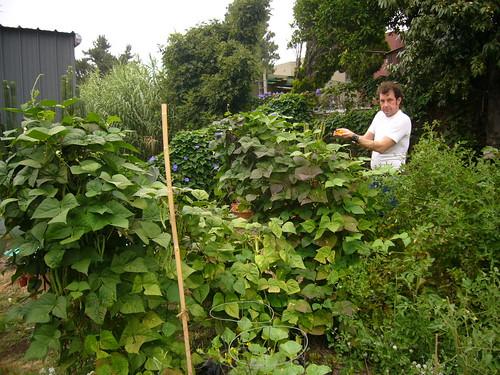 Garden 2008.7.18 - 9