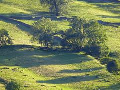 evening shadows (stellabetts) Tags: trees landscape shadows grouptripod