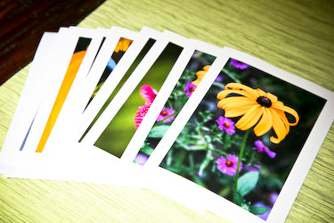 sunflower brunch11