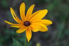 IMG_5577 (kyuen13) Tags: soe supershot mywinners theunforgettablepictures excellentsflowers auniverseofflowers