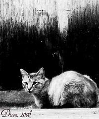 Gaterías... (Dioon) Tags: méxico cat guadalajara gatos animales mamíferos museodeartemoderno dioon catnipaddicts